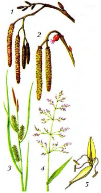 Растения течение