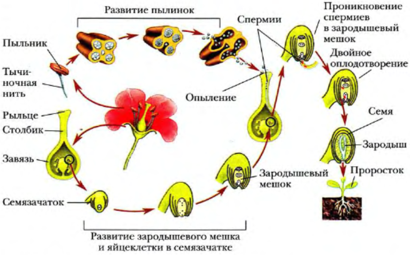 биология 6 класс жизнь растений