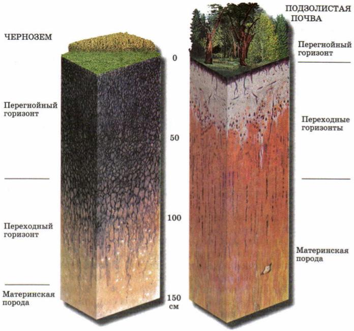 """Презентация на тему: """"cостав и свойства почвы факторы."""