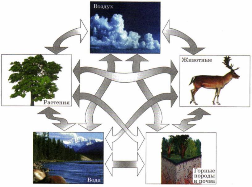 Поэтому их называют природными территориальными комплексами.  Это не простой набор компонентов.