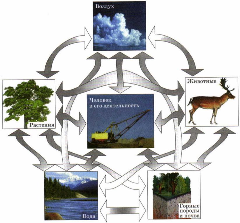 Природно-хозяйственный территориальный комплекс.