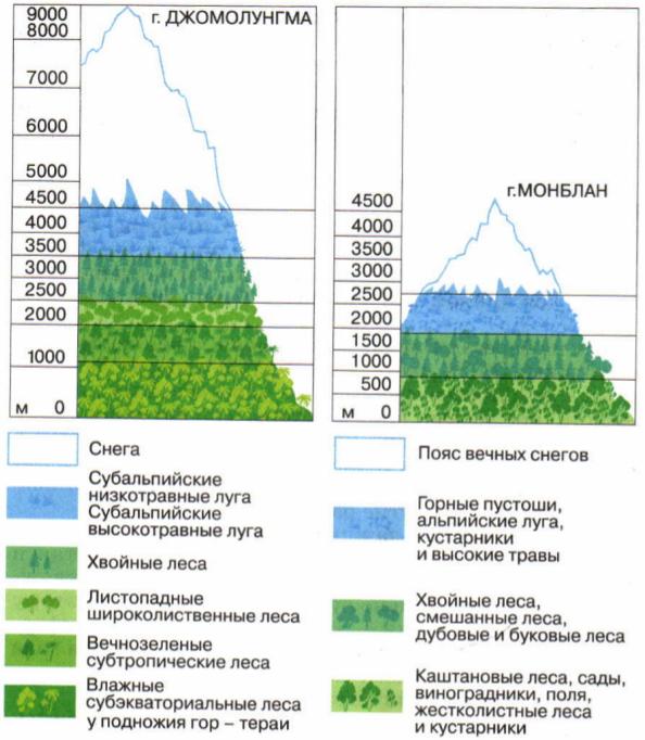 Схема высотной поясности в